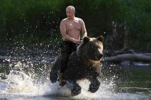 putin rides bear